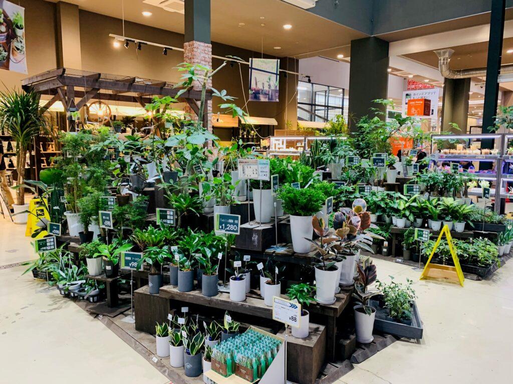 カインズの植物コーナー